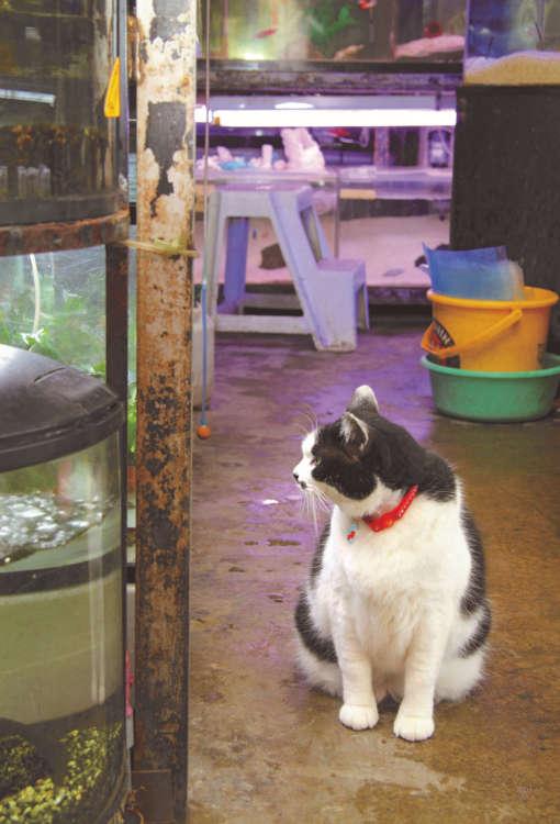 泳ぐ魚を見つめるブータン