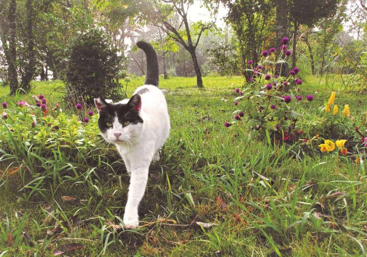 【猫びより】【老いと猫】里山の樹木の下で愛猫と共に自然に帰るお墓(辰巳出版)