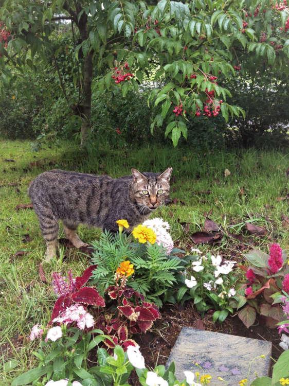 藪化防止のため個人植樹はできないが、墓碑の周りに1年草は植えられる(写真提供・真光寺)