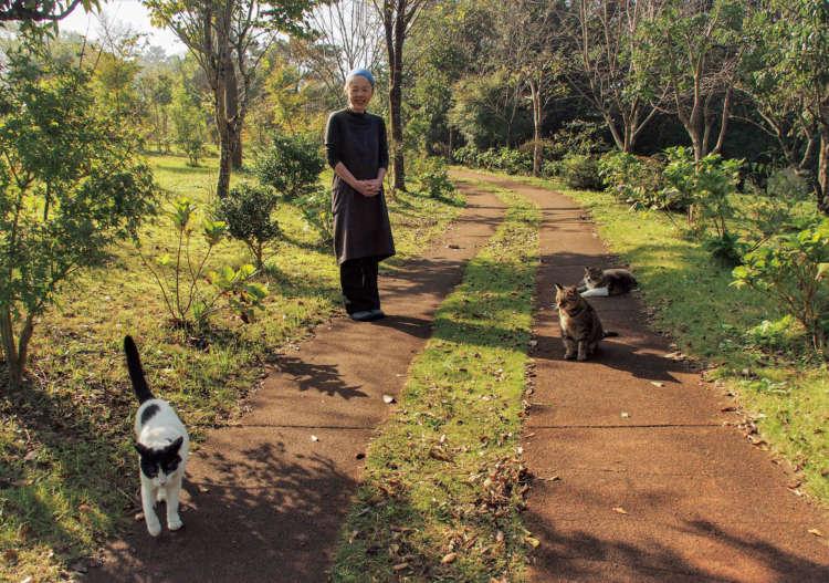 住職夫人の貴久代さんと猫たちが墓苑で朝の散歩