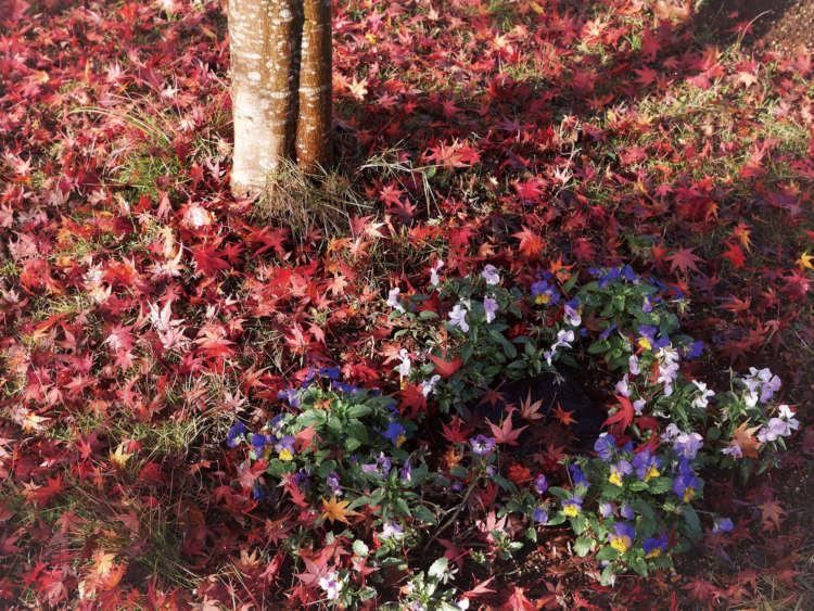 晩秋。紅葉が墓石プレートに美しく降り注ぐ(写真提供・真光寺)
