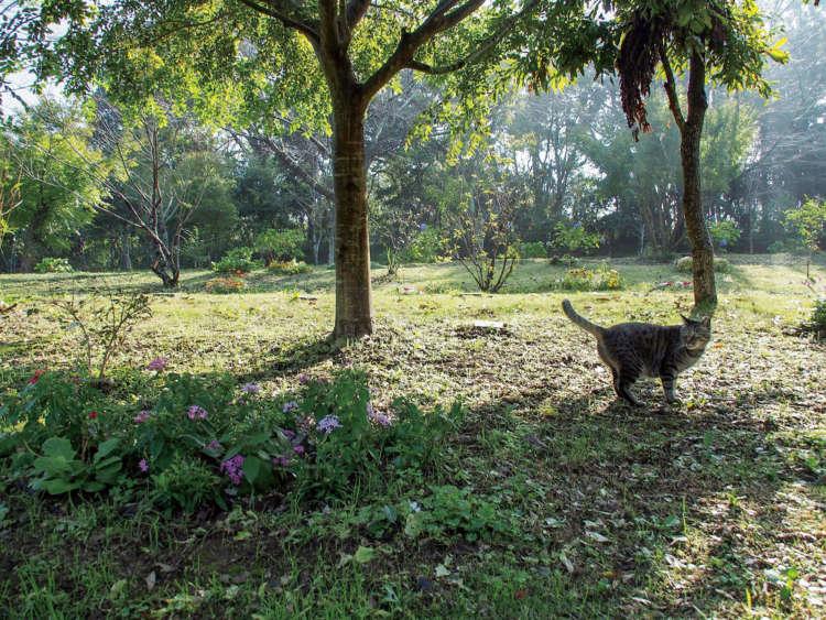 「この木の下がいいわ」と即決したあの名女優、市原悦子さんも、夫と眠る