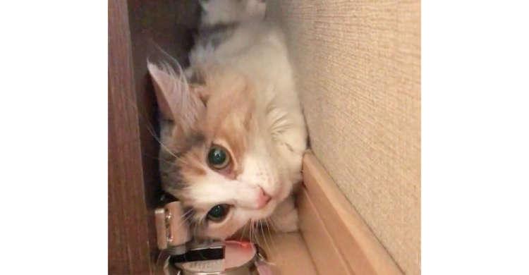 【見事にスッポリ!】オモチャを追いかけ、ドアと扉の隙間に入りこんだ猫さん。その結果…(ノ´∀`*)