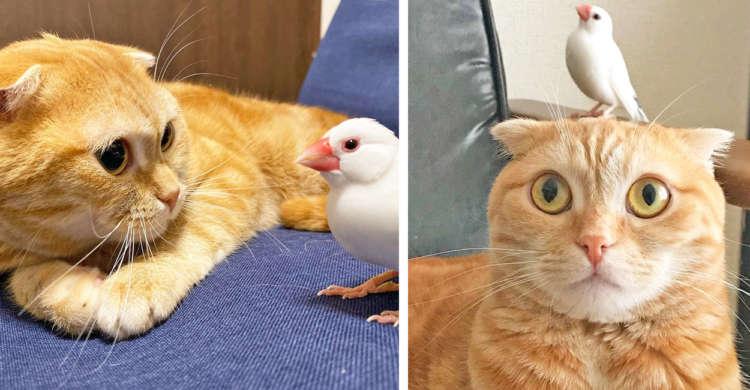 ニャンコと鳥さんはお友達♪ 絶妙な距離をたもって仲良くするふたりに、ほっこりする(*´ω`*) 9枚