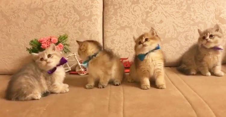 みんながオモチャに釘付けの中、1匹だけがお花に興味津々! マイペースな子猫ちゃんが可愛かった♪