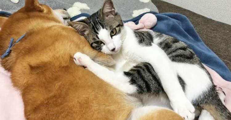 猫さんのお気に入りは『イヌ型湯たんぽ』。ぬくぬく感に包まれて、マッタリする姿が…♪ 44秒