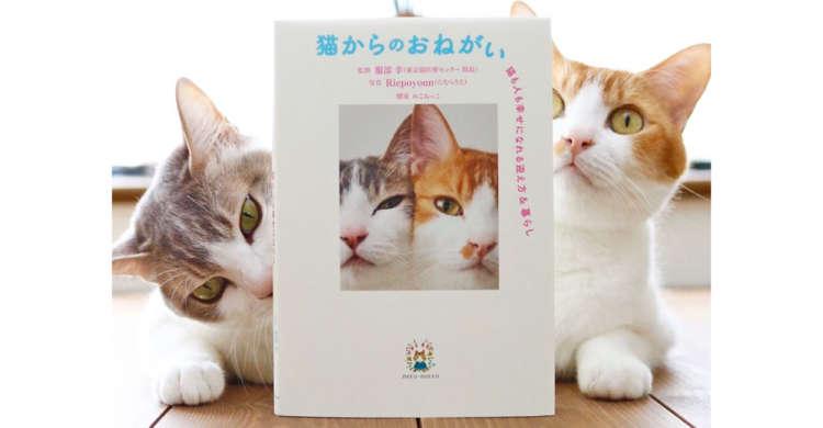 猫を飼おうとしている・飼っている方どちらにもオススメ。最新のハウツー本『猫からのおねがい』発売♪