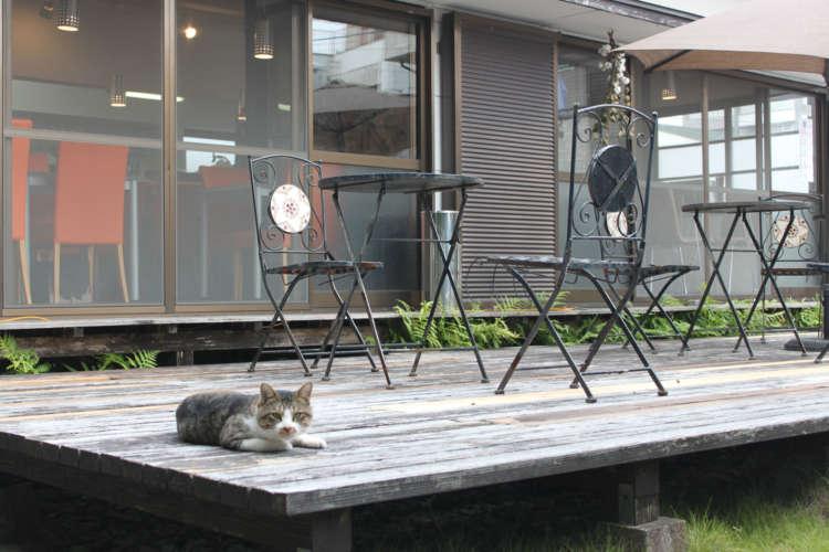 ウッドデッキには外猫も惹かれてやってくる