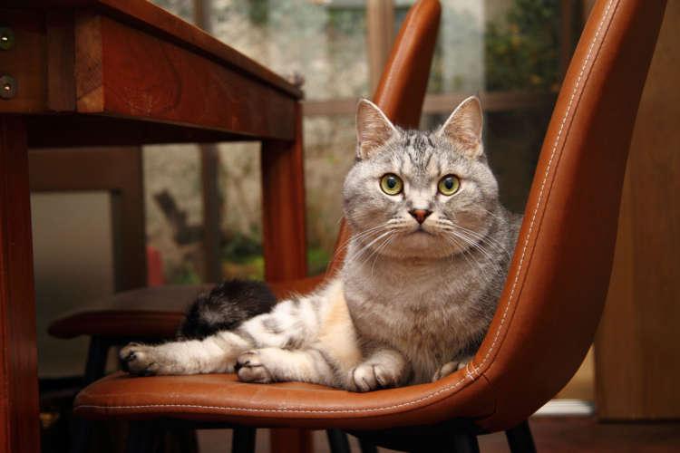 猫の手貸します