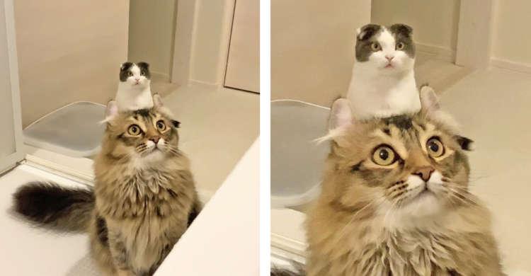 ニャンコの頭から…にょきっと猫が生えている!? 思わず2度見するキノコのような写真が話題に♪