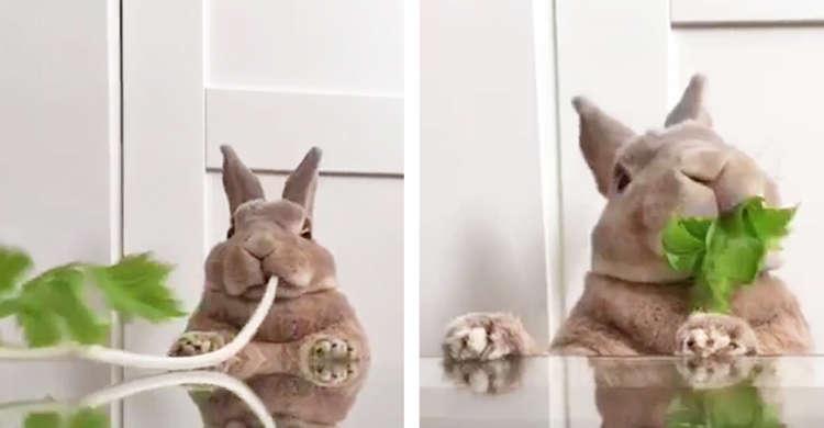 【まるでブラックホール】むしゃむしゃとセロリを元気よく食べるウサギさん。その勢いがスゴすぎた(笑)