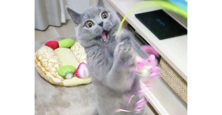 【元気がもらえる☆】ぴょーんとジャンプし、太陽のようなキラキラ顔でオモチャをGetする猫さん♪