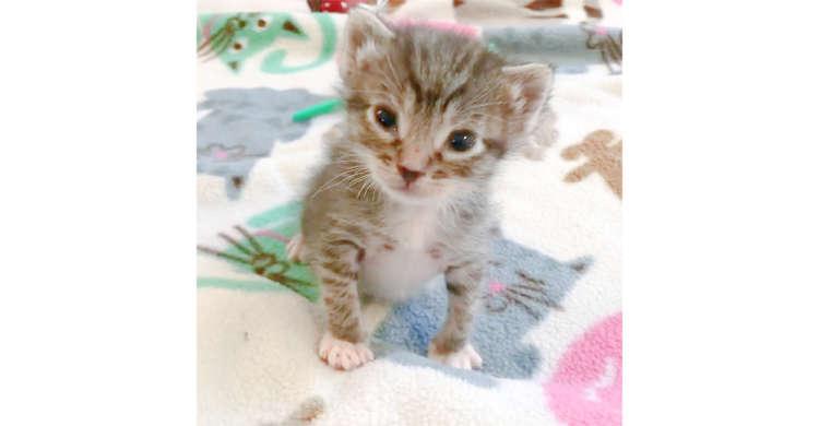 ママの声に誘われて近寄ってくる子ネコちゃん。まだ頼りない、よちよち歩きがたまらなく可愛い♡