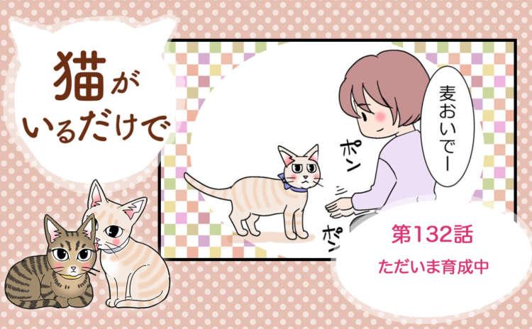 【まんが】第132話:【ただいま育成中】まんが描き下ろし連載♪ 猫がいるだけで(著者:暁龍)