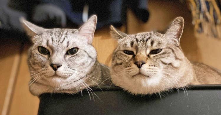 """「遊べや」飼い主さんをジっと見つめ、圧をかけてくる猫たちッ。迫力ある """"お誘い"""" が話題に! 2枚"""