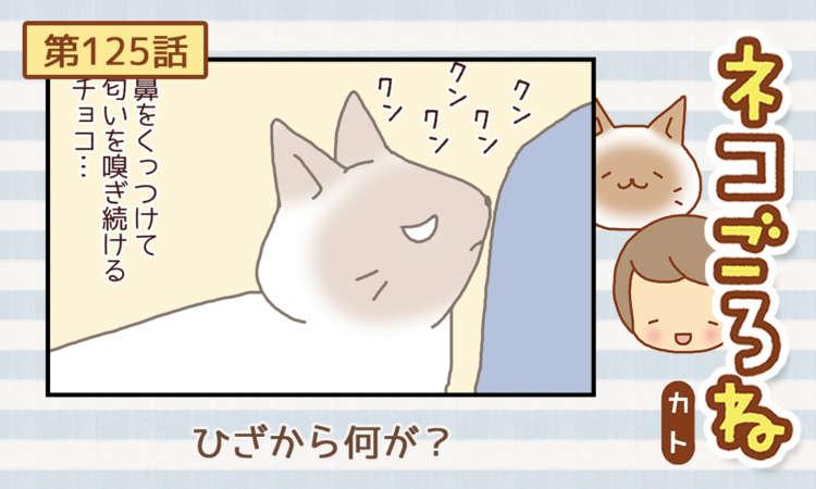 【まんが】第125話:【ひざから何が?】まんが描き下ろし連載♪ ネコごろね(著者:カト)