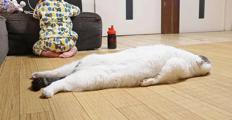 脱力しきって床にぺた〜んとなる猫さん! ゆるすぎる格好につい笑っちゃう(*´艸`*) 5枚