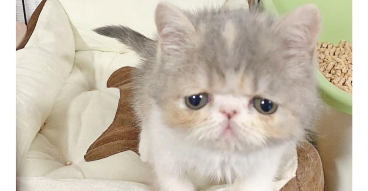 困り顔でなにかを訴えている子猫ちゃん! 胸のドキドキが止まらない、破壊力抜群の1枚…(〃ω〃)