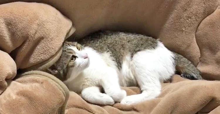【やんちゃっ子、参上☆】寝ている猫さんを頭上から何度も襲う影! その正体は…(;´∀`) 59秒