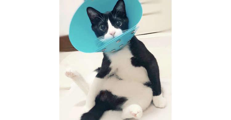 足を広げぬいぐるみのように座る子猫さん。愛らしいポーズに、思わず「可愛い」 の声がもれるッ♡ 4枚