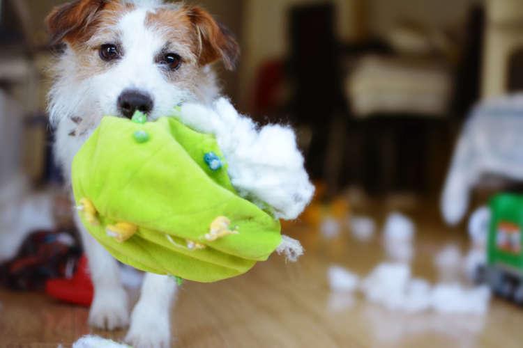 【新型コロナウイルスとペット】愛犬や愛猫の「縫い針」誤飲に注意!!
