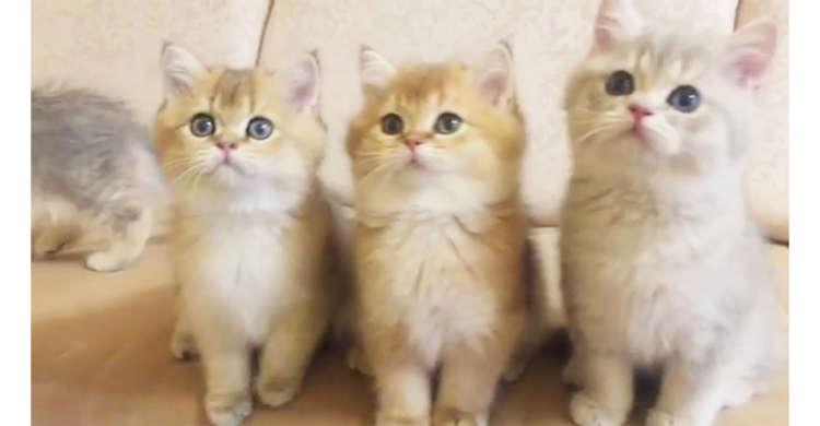 【子ネコと追いかけっこ】カメラが気になる子ネコたち。あどけない表情でトコトコ後を付いてくる♡