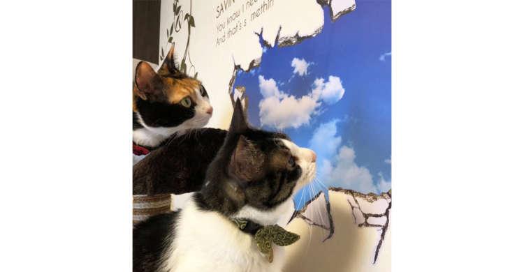 """爪研ぎ跡を""""青空の描かれた壁紙""""で隠してみたら → ネコたちが予想以上に空を感じていた(*´∀`)笑"""