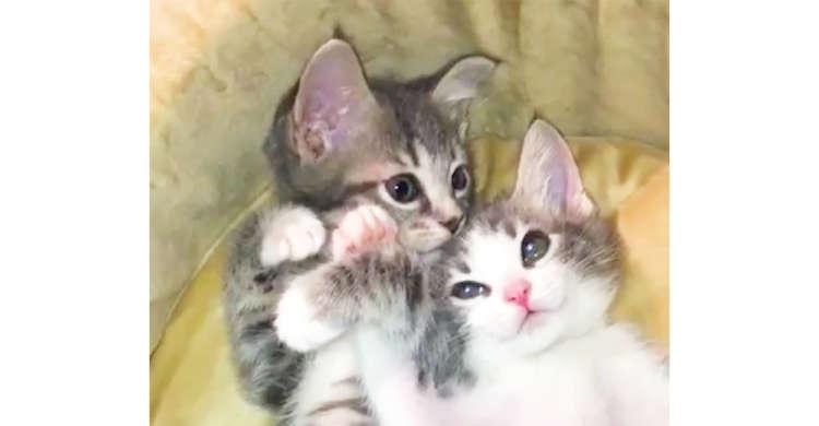 【二度寝の相談】お昼寝から起きたけど、まだ眠い子猫ちゃんたち。二度寝の打ち合わせが可愛くて…♪