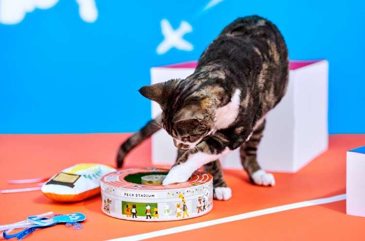 【愛猫用】PECOBOX(ペコボックス)『PECO運動会号』!愛猫のプレゼントの中身を解説♪