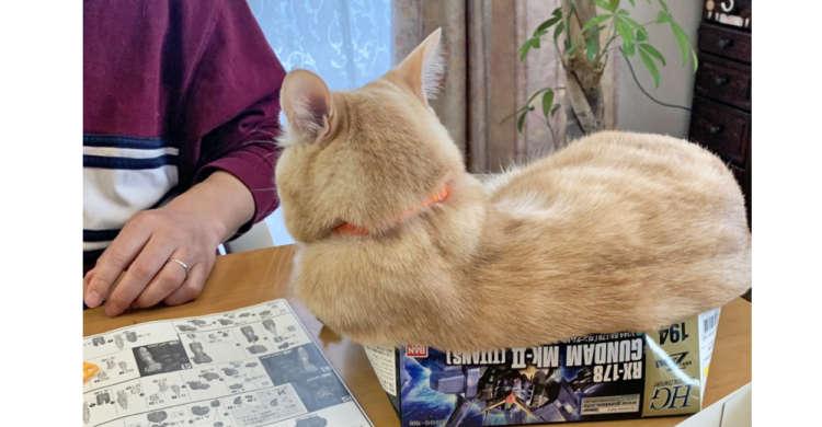 箱が変形してしまうほどぎっしり♪ もふもふ毛に包まれた『ネコ型プラモデル』が誕生(ノ´∀`*) 3枚