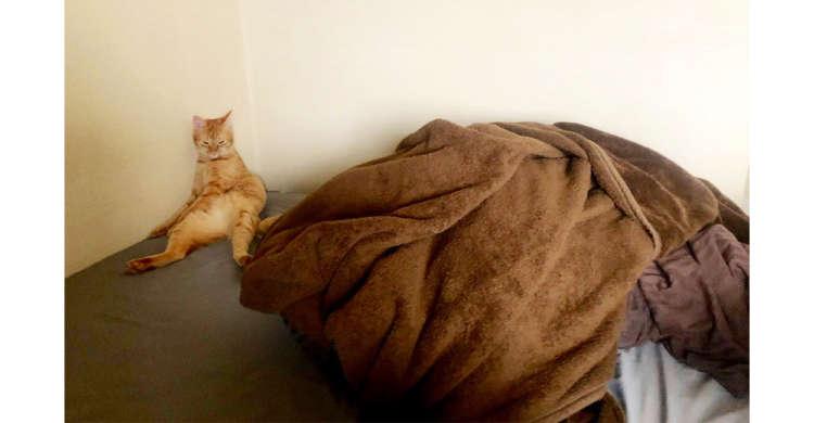在宅勤務中に愛猫の構って攻撃をかわし続けた結果…振り向いたらすごい形相でやさぐれていた…! 3枚