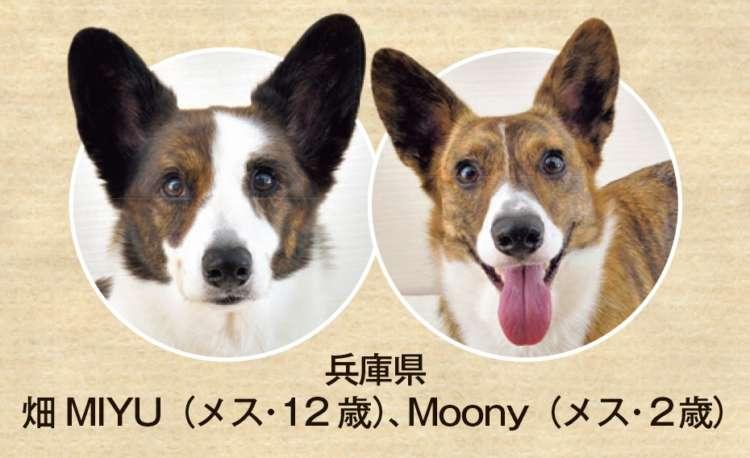 兵庫県 畑MIYU(メス・12歳)、Moony(メス・2歳)