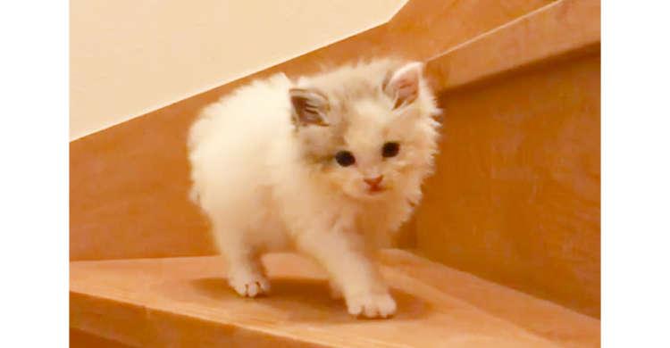 子ネコが階段にチャレンジ! モフモフなお尻も、ためらう姿も…可愛いしか見当たらない(´﹃`) 45秒