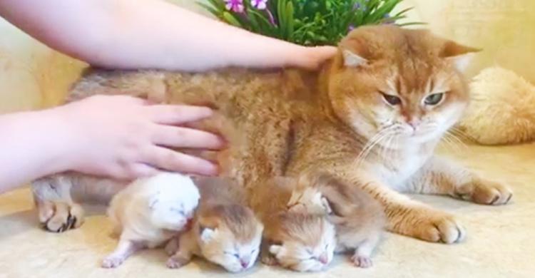 出産を終えたママ猫さん、子ネコを前に安堵の表情 → 元気な子を産んでくれて「ありがとう」と伝えたい♡