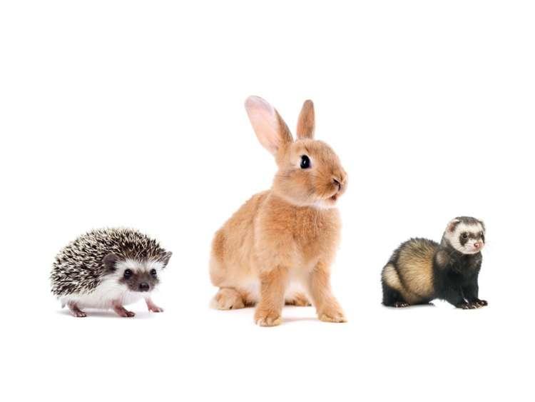 どんな名前がいい? ランキングから見るウサギ・ハリネズミ・フェレットの名付け