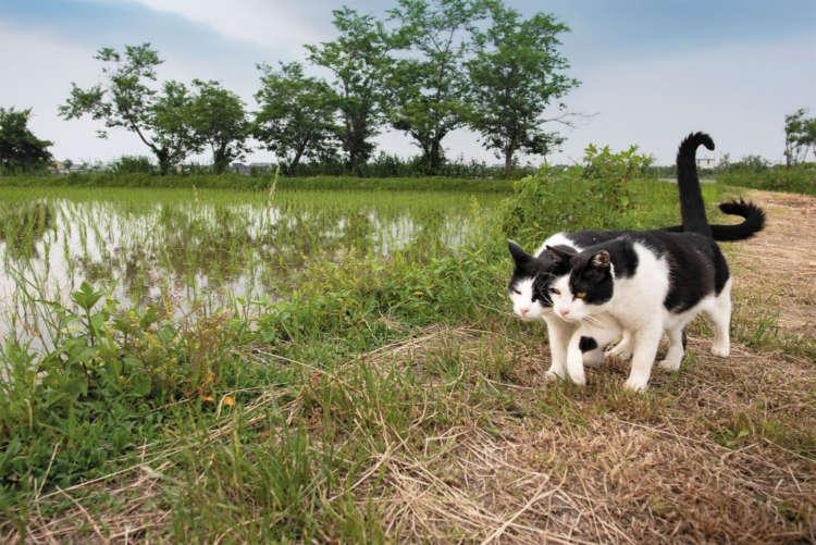 【猫びより】【ニッポン猫旅】琵琶湖 水辺に生きる猫たち(辰巳出版)