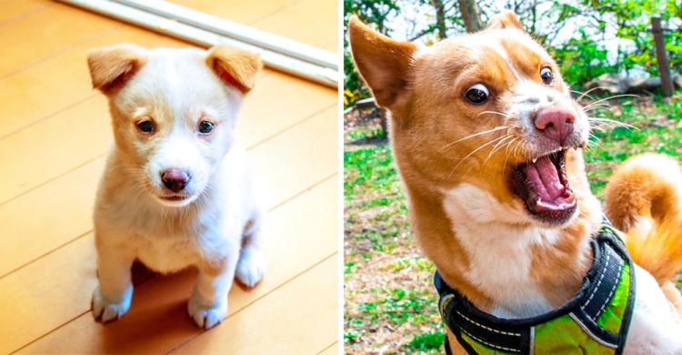 白くてコロコロした子犬時代 → 現在の写真と比べてみたら、その変貌ぶりにビックリΣ(゚Д゚) 5枚