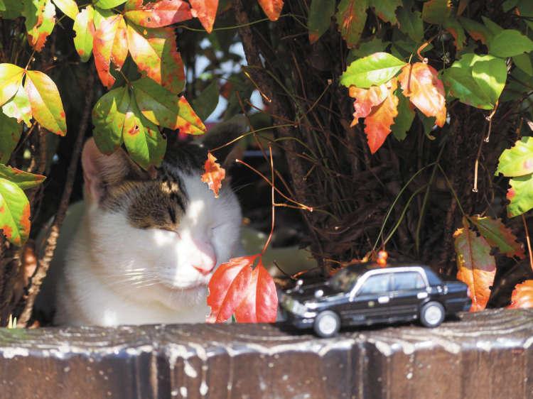 【猫びより】【ニッポン猫旅】京都老舗タクシーが撮る猫たち(辰巳出版)
