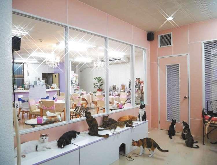 「動物たちを守る会ケルビム」の猫カフェ「Nyangusk」