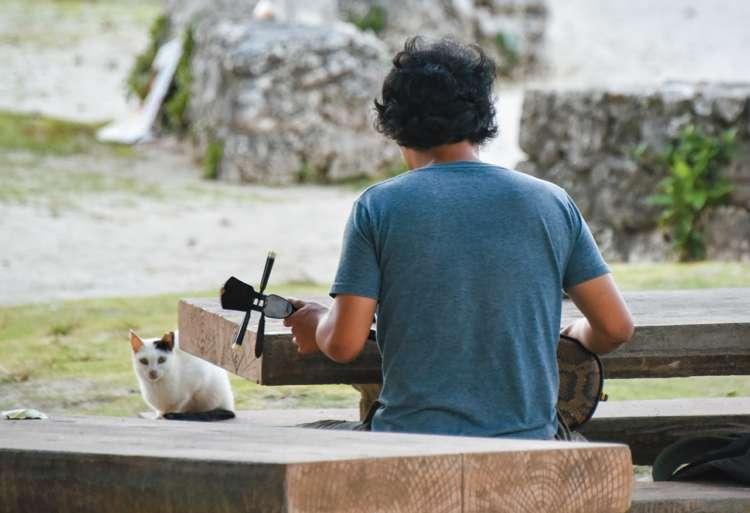 日も暮れて誰もいなくなった海岸で三線の練習を猫に聞かせる若者