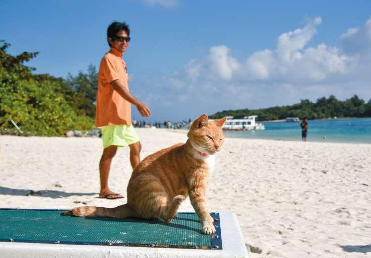 朝、白い砂浜を行き交う観光客やグラスボートを見送る人懐っこい茶トラ君