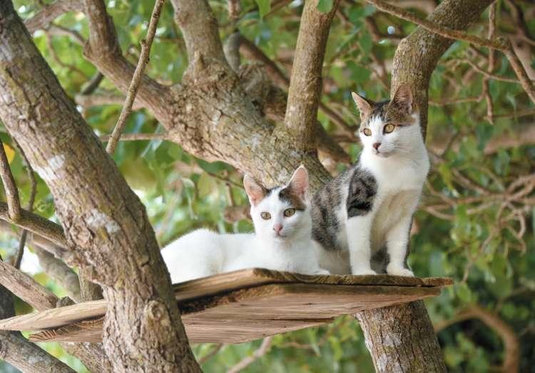 熱帯の木々の間に、猫ハウスや見晴台があった