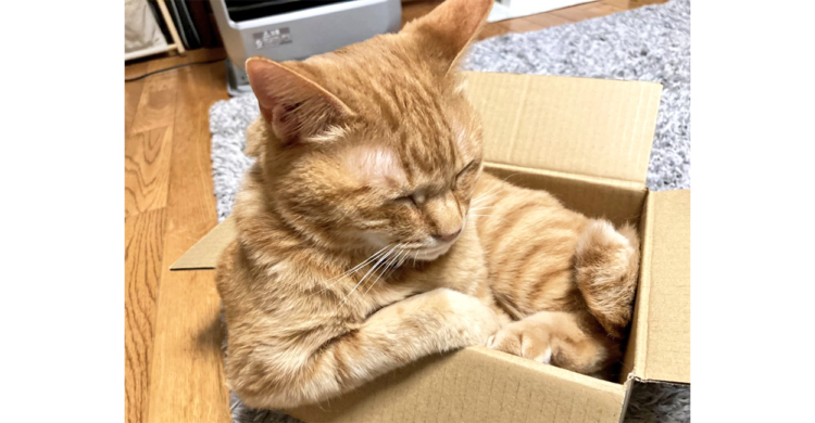 小さな箱に入ってくつろぐニャンコ。その貫禄ある姿がまるでオジサンの入浴シーンみたいで…(´Д`)