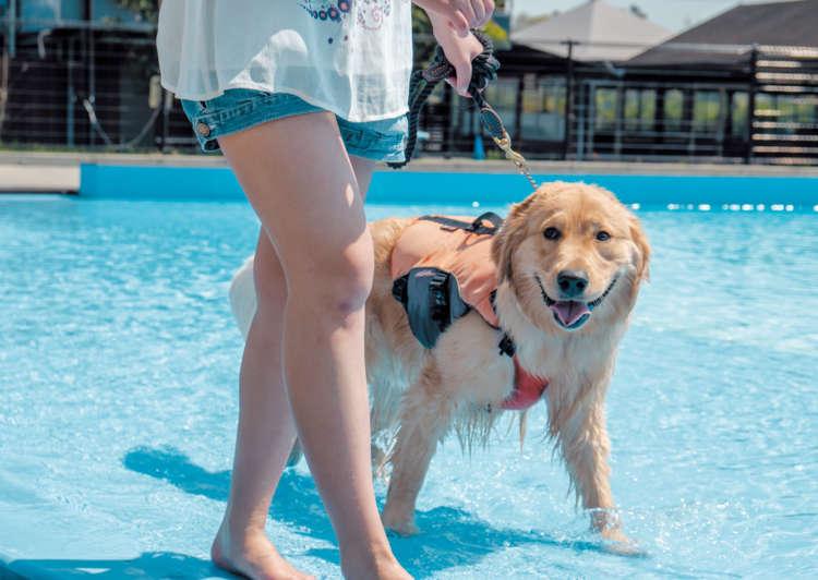 飼い主さんがプール側に立ち、水際を歩きます