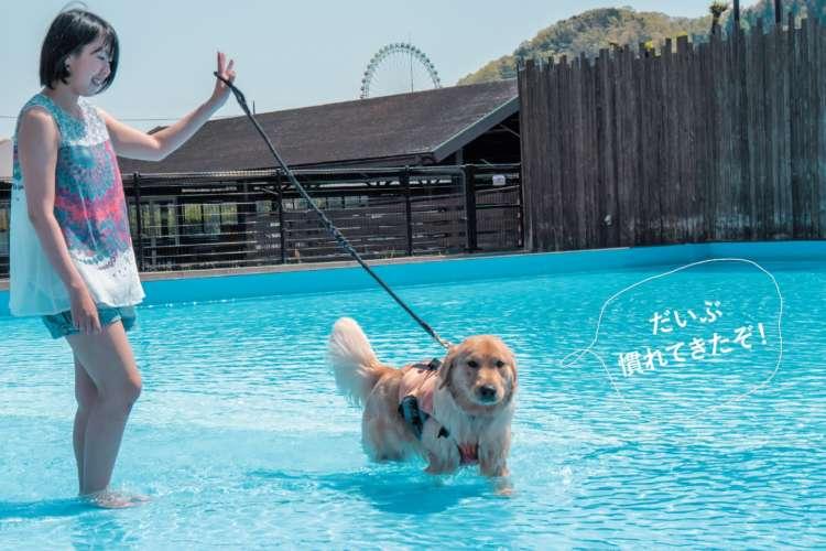 プールの底に足がつく範囲で、少しずつ深い場所に入ってい きます。愛犬が怖がるようなら無理せず、浅瀬に戻りましょう