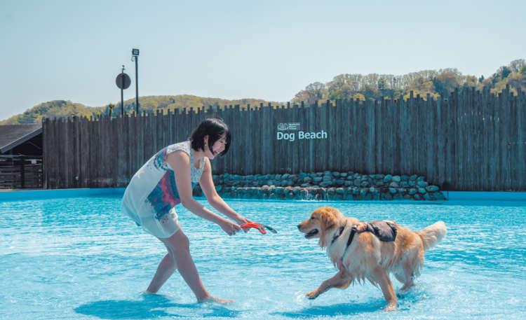 おもちゃを見せたまま、飼い主さんが先導して水に入り、 しばらく浅瀬で遊びます