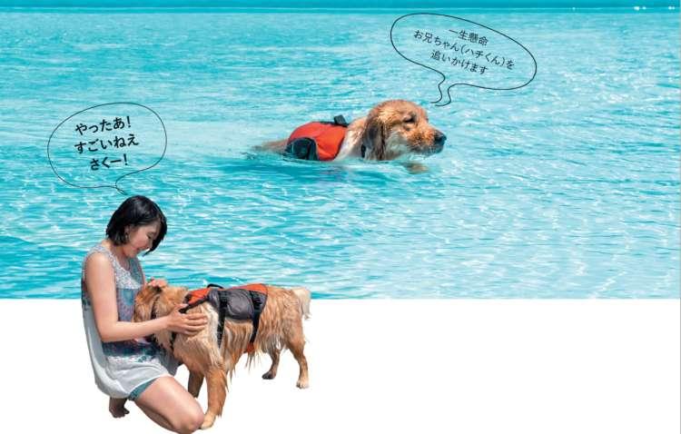 ついに 足の届かない深いところへ到達! しっかり水をかき、 すぐに 泳げるようになりました