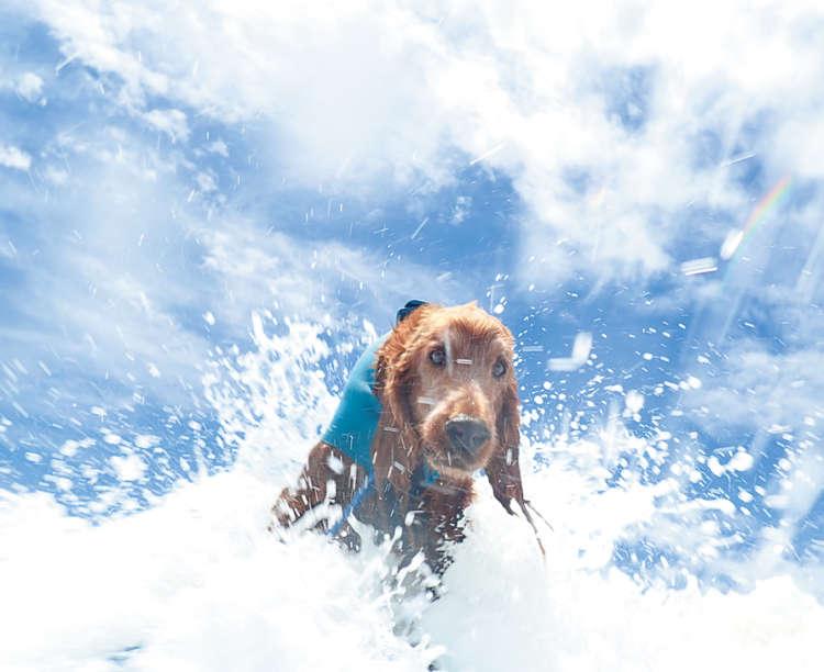 愛犬と一緒に楽しむ水遊び。海で行われ るアクティビティでは、ドッグサーフィンの 知名度が高く、人気を集めています。