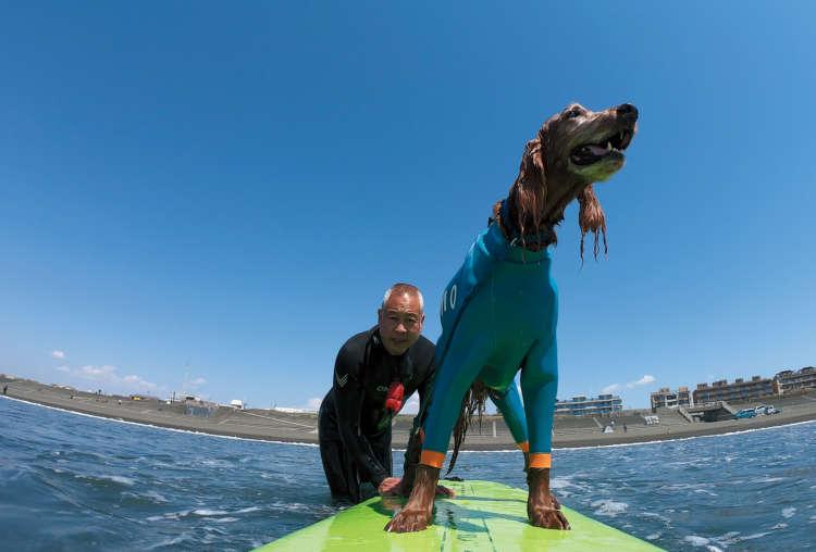 夏旅は水を求めて~上級編:ドッグサーフィンの魅力