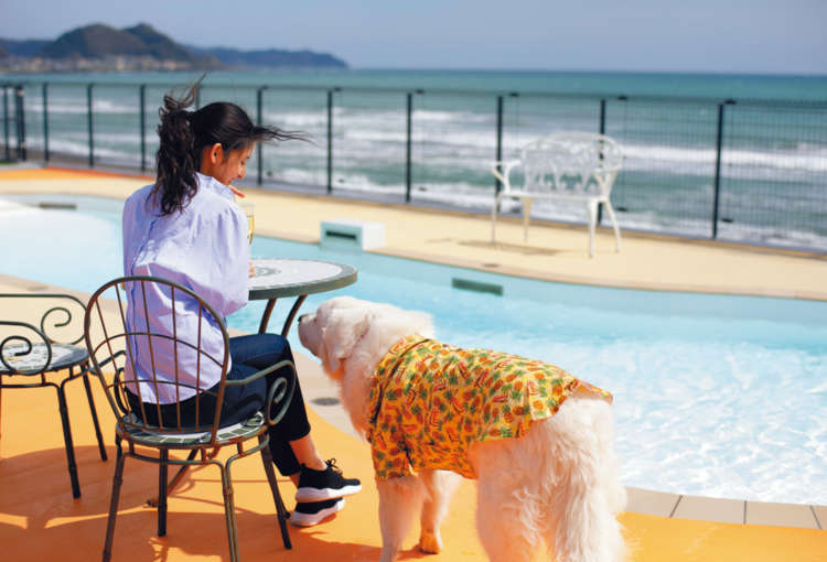 夏旅は水を求めて~愛犬用プールがある宿泊先はここ!